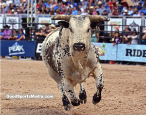 The Bulls of the PBR